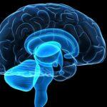 Rmn Cerebrale (SSN)